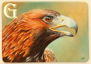 sue warner, miniature oil painting,GOLDEN EAGLE
